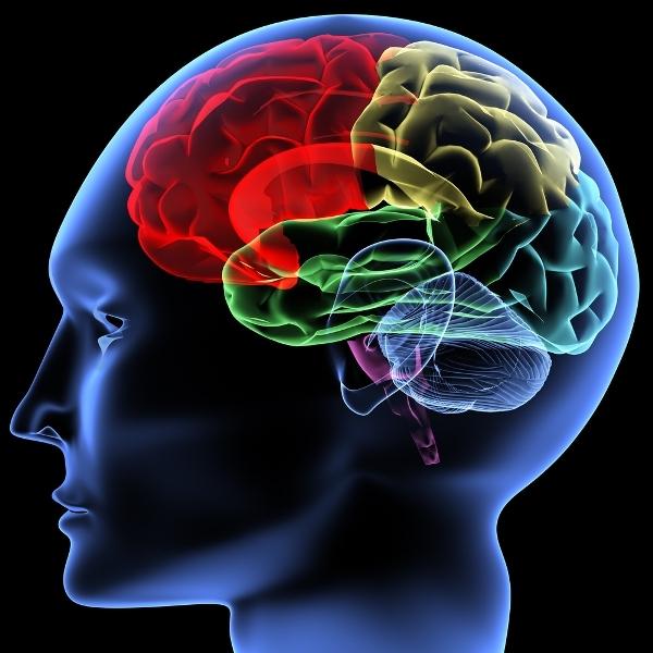 Проблемы с кратковременной памятью: способы развития