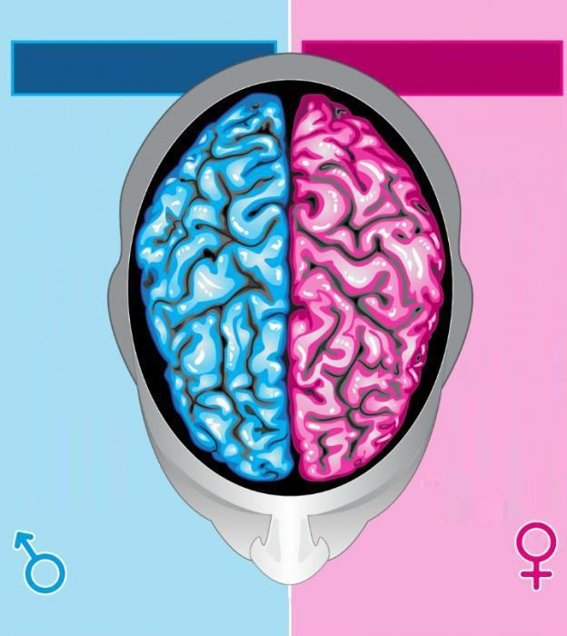 За что отвечает левое полушарие мозга и каковы его функции?
