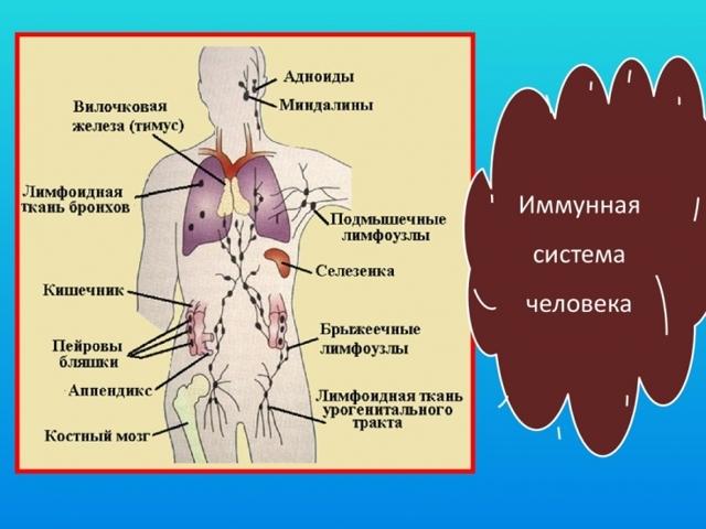 Метод Вима Хофа: методика избавления от болезней