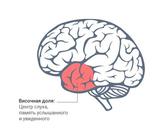 Метод Цицерона: самый эффективный метод запоминания