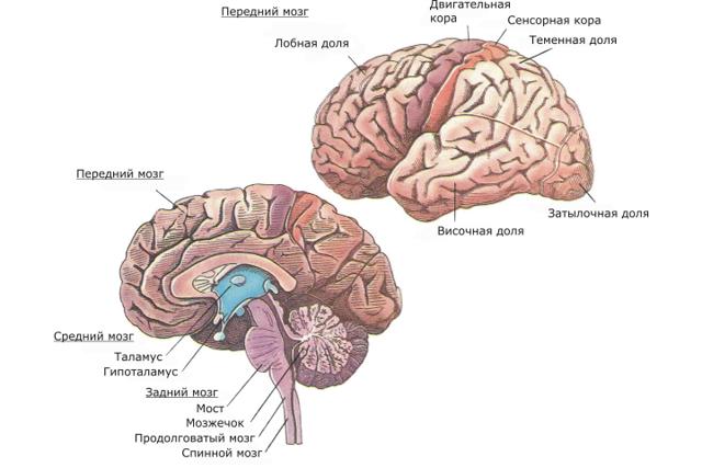 Ежедневная тренировка памяти: 7 советов держать мозг в тонусе