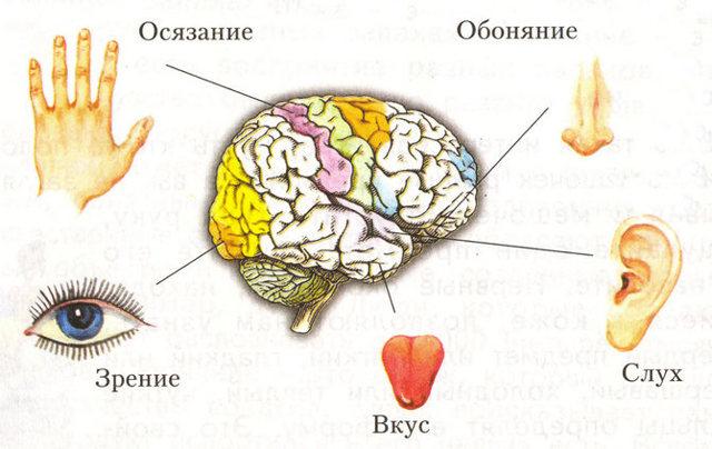 Образная память: её особенности и возможности развития