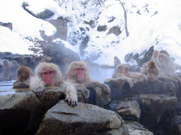 Эффект сотой обезьяны: что это такое и как поменять мир?
