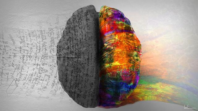 Как определить какое полушарие мозга более развито?