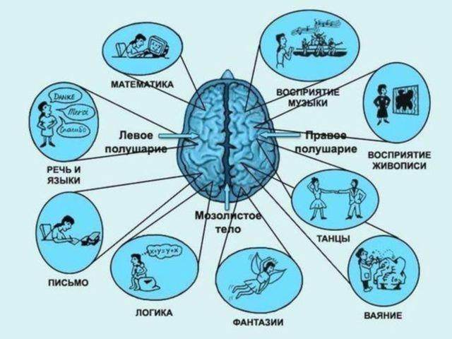 На сколько процентов работает мозг человека: мифы и реальность