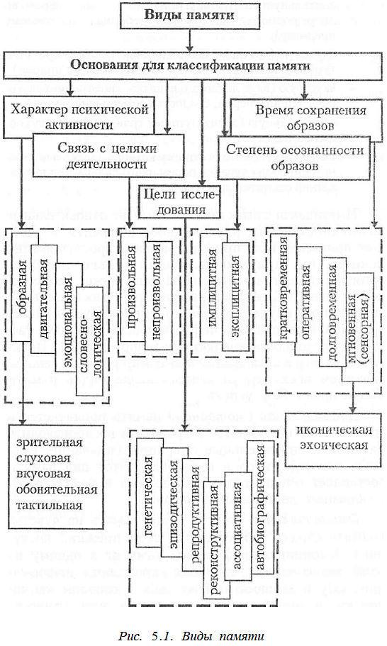 Виды памяти у человека: особенности и их основные характеристики